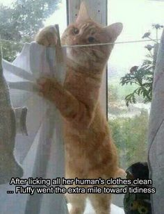 Cleanliness is next to Catliness