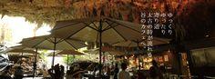 ケイブカフェ   ガンガラーの谷 OKIMAWA 沖縄