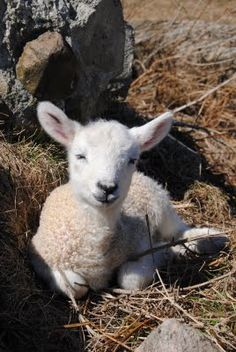 Put a battery pack on this lamb and it would be how I remember Marlys Grimmius-- calming, loving, energizing....someone who cared.