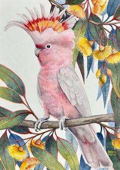 Major Mitchell Cockatoo on Yellow Gumblossoms, Australian Native Bird Print, Pink Cockatoo Watercolour, Gumblossom Watercolour Australian Native Flowers, Australian Birds, Pink Cockatoo, Watercolor Bird, Watercolor Artists, My Art Studio, Bird Illustration, Illustrations, Bird Drawings