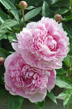 Ideas Flowers Bouquet Tattoo Pink Peonies For 2019