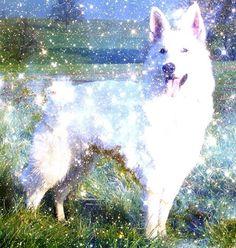 A Niebla, mi perro - Rafael Alberti