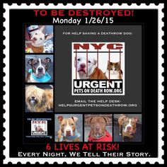 TO BE DESTROYED: 6 beautiful dogs to be euthanized by NYC ACC- MON. 01/26/15. This is a VERY HIGH KILL shelter group. YOU may be the only hope for these pups! ****PLEASE SHARE EVERYWHERE!!To rescue a Death Row Dog, Please read this: urgentpetsondeath... To view the full album, please click here:  https://www.facebook.com/media/set/?set=a.611290788883804.1073741851.152876678058553&type=3