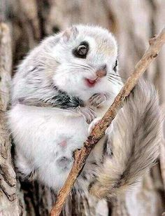 Aircraft - Flying Squirrel