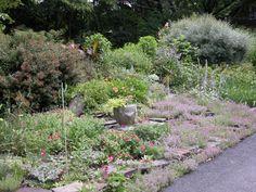 Garden Design: Combining Plants: Nepeta in a Natural Garden