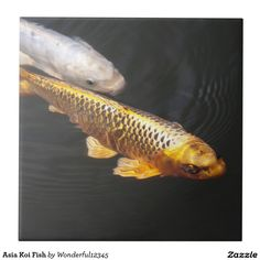 Asia Koi Fish
