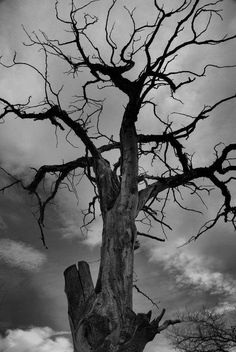 Spooky dead tree.