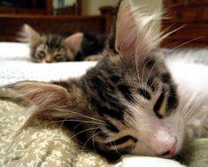Gary and Missy [redux]  kitten