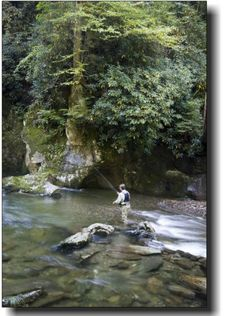 Image detail for -Cherokee Nc Trout Fishing | Trout Fishing Headquarters