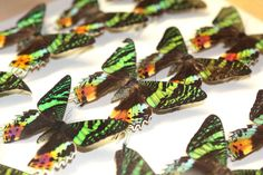 Butterflies in the National Museums Collection Centre.