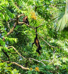 Costa Rica! The wildlife in Tortuguero, especially the cheeky monkeys, was incredible!