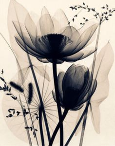 black and white lotus flowers