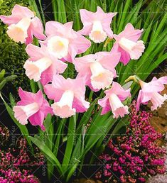 Cheap aquatic plants, Buy Quality narcissus seeds directly from China flower seeds Suppliers: Bonsai Narcissus seeds,daffodil flower seeds Absorption Radiation aquatic plants double petals Narcissus garden plant Flower Garden, Planting Flowers, Narcissus Flower, Plants, Bulb Flowers, Daffodil Flower, Beautiful Flowers, Love Flowers, Flower Seeds