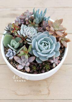 The cutest succulent bowl