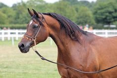 These 30 Arabian Horses Are Ready to Win over Your Heart