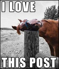 Just a horse and his post More