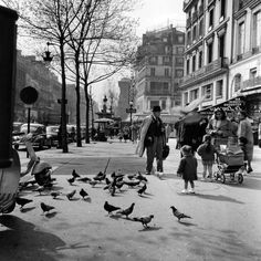 Duiven op de boulevard, Parijs / Pigeons on the boulevard, Paris, 1954, Kees Scherer. Dutch (1920 - 1993)