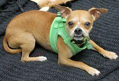 Adopt Salvador Dogi On Petfinder Animal Welfare Quote Dog Adoption Adoption