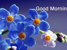 Good Morning Beautiful Blue Flowers Images