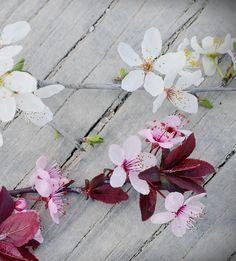 Flores que anuncian la primavera