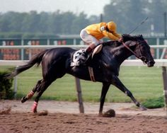 Swale Seattle Slew- Tuerta By Forli 14 Starts 9 Wins 2 Seconds 2 Thirds. Won 1984 Kentucky Derby And Belmont Ran 7th In Preakness. Champion 3 Year Old.