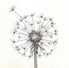99 Insanely Smart, Easy and Cool Drawing Ideas to Pursue Now - Bleistiftzeichnung - Art Sketches Pencil Drawings Tumblr, Drawing Sketches, Drawing Ideas, Sketching, Sketch Ideas, Tattoo Drawings, Flower Sketches, Flower Pencil Drawings, Easy Sketches To Draw