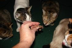 Is Homemade Cat Food Right For Your Cats?