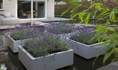 'floating' lavender planters in a stunning contemporary garden filled by a large pond - Hoveniersbedrijf Jan Abrahams BV