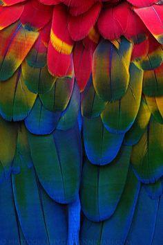 Rainbow | Arc-en-ciel | Arcobaleno | レインボー | Regenbogen | Радуга | Colours | Texture | Style | Form |  Parrot