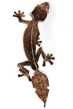 The Satanic Leaf-tailed Gecko