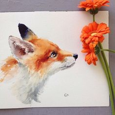 Watercolor summer fox painted on a white background. Looks almost like a young fox. The painter placed orange flowers in the view when they took the picture, therefore it looks like the kid fox is sniffing the flowers. What a beautiful piece of artwork.