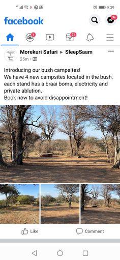 Campsite, Safari, Camping