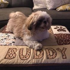 How cute is Buddy on his new quilt.he chose the popular Small size. Perfect for your four legged pals, personalised & in your choice of colours Car Blanket, Picnic Blanket, Personalised Cushions, Changing Mat, Dog Beds, Dog Gifts, Baby Quilts, Baby Animals, Baby Shower Gifts