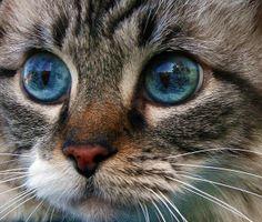 Cat Eyes by Calsidyrose, via Flickr