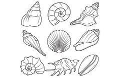 Seashells by LoveGraphicDesign on @creativemarket