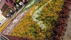 Tapete floral, volcan, Semana Santa