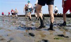 Laat je footprints achter op het drooggevallen wad en maak een oversteek naar een van de waddeneilanden.