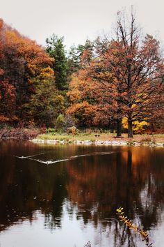 This is a beautiful image of a lake in autumn. Did you know that the reddish colour we see in the leaves in autumn is always there, throughout the whole year, but we can only see it in the autumn? Autumn Lake, Photo Search, Free Stock Photos, Beautiful Images, My Photos, Survival, River, Photography, Leaves