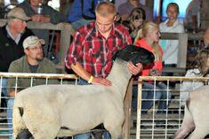 Places to go: Junior Fair Sheep Lead Class and Breeder Judging #dcfairwi #JudgingSchedule #JuniorLivestock