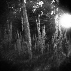 Holga 120N Black & White