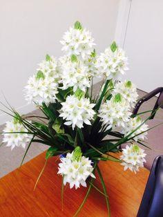 Gorgeous Star of Bethlehem flowers! Thanks, Global Rose!