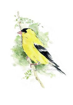 Yellow goldfinch watercolor print Eastern by TheJoyofColor on Etsy