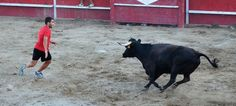 Santacara: Vacas Hermanos Marcen (13) Goats, Horses, Animals, Cows, Siblings, Animais, Animales, Animaux, Animal