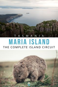 A detailed guide documenting my self-guided Maria Island Walk in Tasmania. Follow my 3-day hike on Maria Island circuit route. Experience sweeping bays, epic island views on Mount Maria, world heritage convict history and abundant wildlife. Australia Country, Day Hike, Tasmania, Travel Guides, Family Travel, Circuit, Travel Inspiration, Hiking, Island