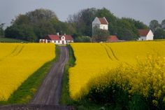 Österlen, Sweden About Sweden, House In Nature, Stockholm, Iceland, Countryside, Norway, Scandinavian, Europe, Country Roads