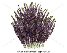 can-stock-photo_csp6124124.jpg (450×357)