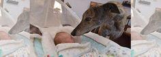 """""""O Grito do Bicho"""": Cão resgatado de maus-tratos (re)conhece o amor"""