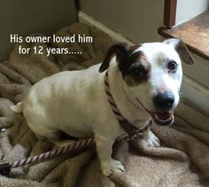 07/23/15-Russ' owners could no longer care for him. Read his sad story and help him find a new home.