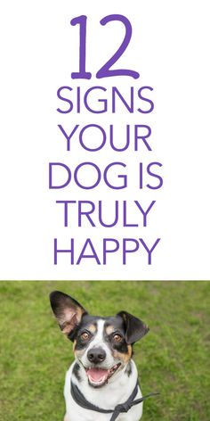 12 Signs Your Dog Is Truly Happy