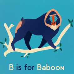 B is for baboon. Part 2 of pollys flash cards.   #alphabet #baboon #childrensillustration